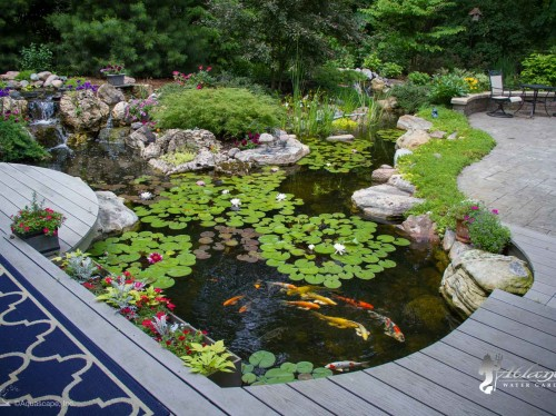 eco system koi pond picture by atlantis water gardens nj