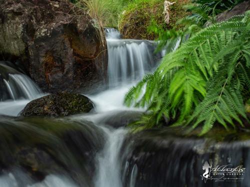 ecosystem koi pond installations
