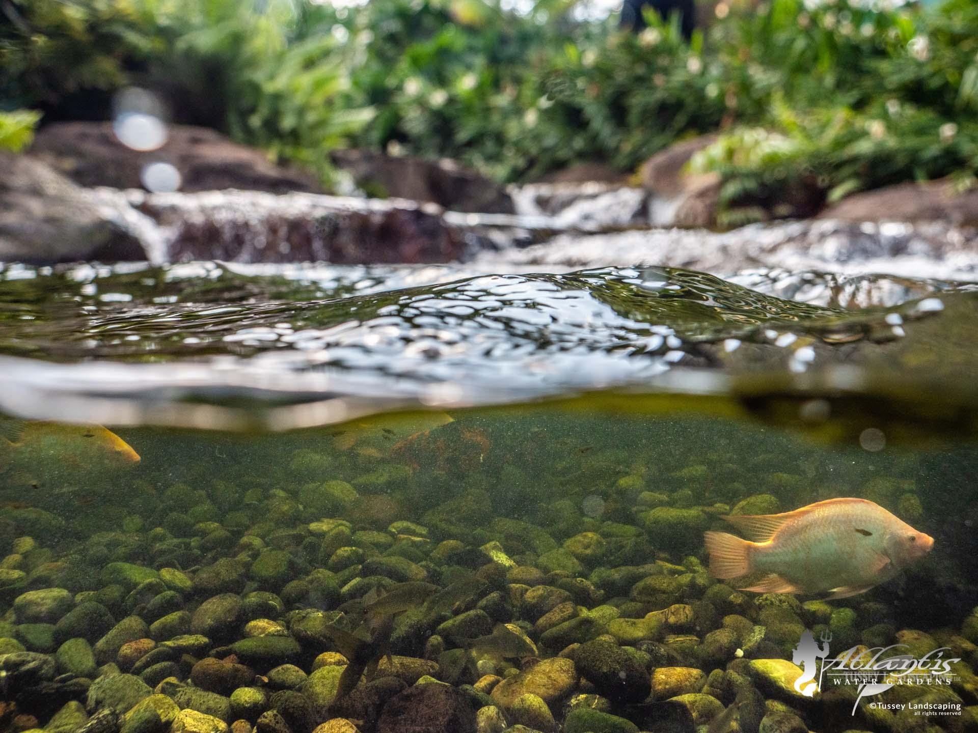 pond in villaviciencio colombia, primavera urbana